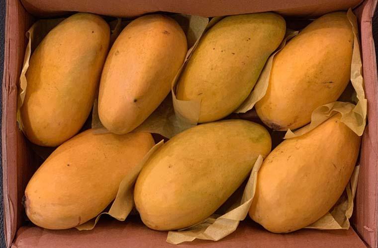 Pakistan seeks to export mangoes to China through Khunjrab border